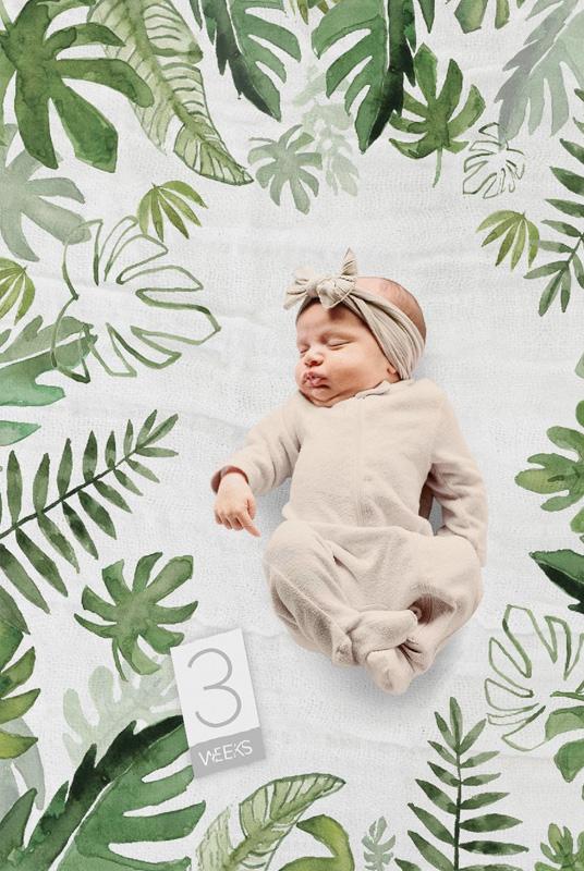 Kit fotos bebé Tropical. Fondo Muselina + tarjetas edad